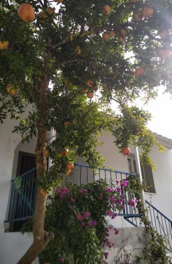 satılık modern köy evi ve 1000m2 arsa